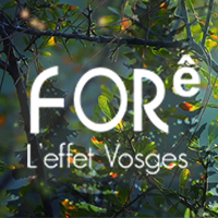 FORê l'effet Vosges